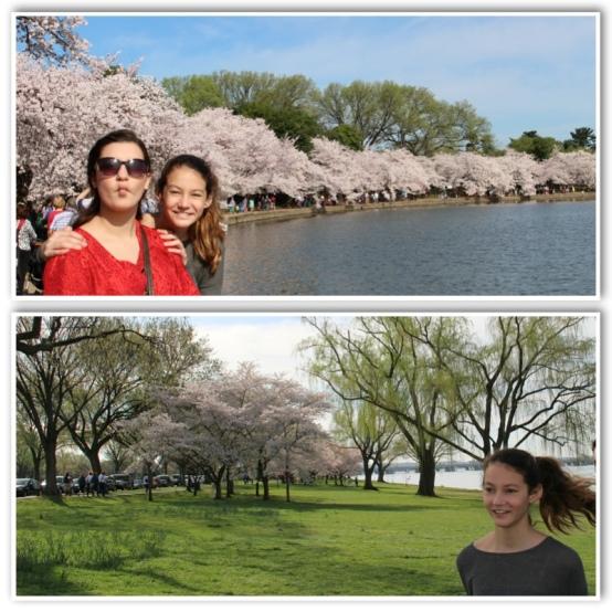 Cherry Blossom Fun